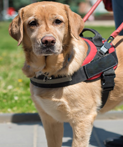 reasonable accomadations for service animals